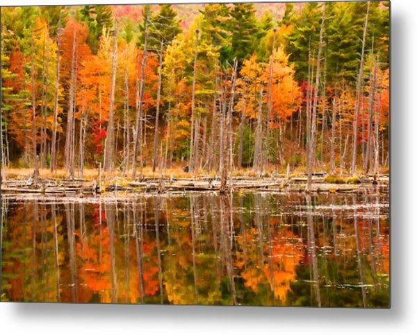 Plethora Of Fall Colors Metal Print