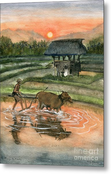 Plowing The Ricefield Metal Print