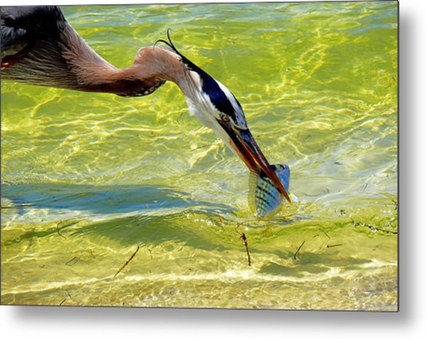 Plucked From The Sea Metal Print
