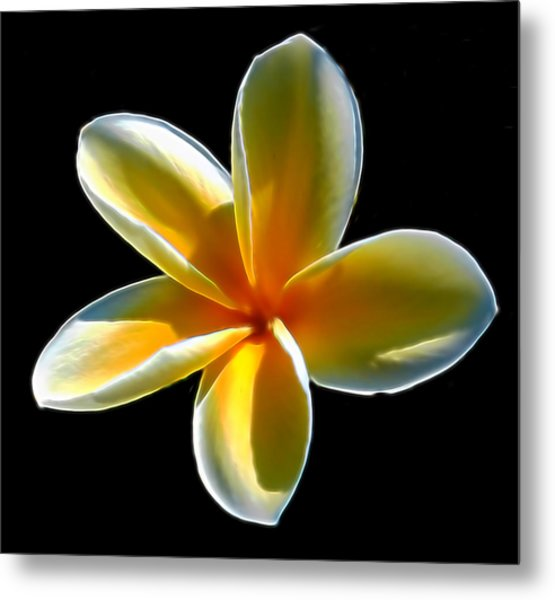 Plumeria Against Black Metal Print