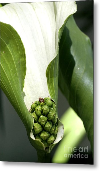 Pocket Of Foliage Metal Print by Laura Paine