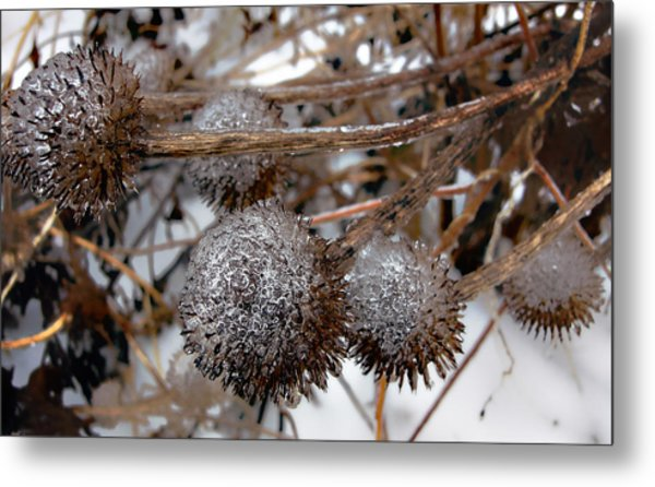 Pods In Ice Metal Print