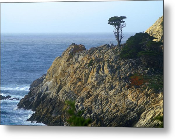 Point Lobos Cypress Metal Print