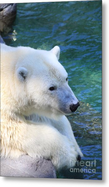 Polar Pal Metal Print