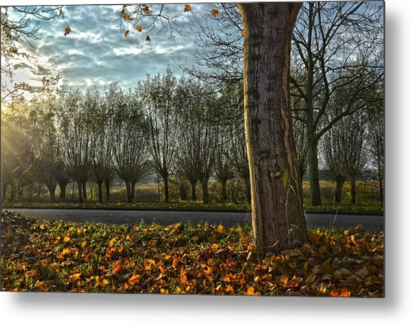 Pollard Willows In Rotterdam Metal Print
