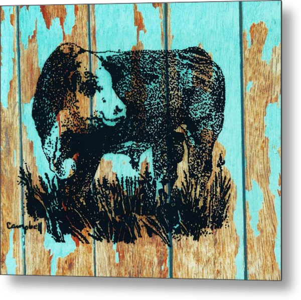 Polled Hereford Bull 23 Metal Print