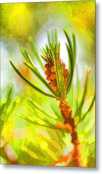 Pollen Cones Metal Print