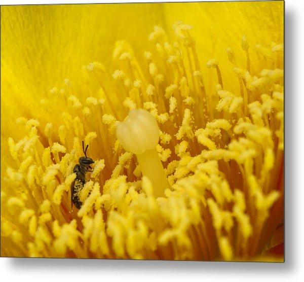 Pollen Forest Metal Print