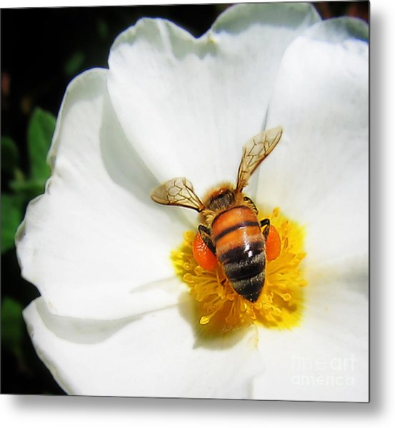 Pollinating Metal Print