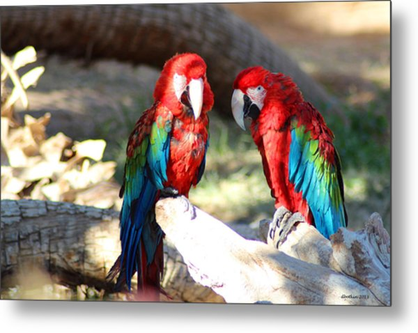 Polly And Pauly Metal Print by Dick Botkin