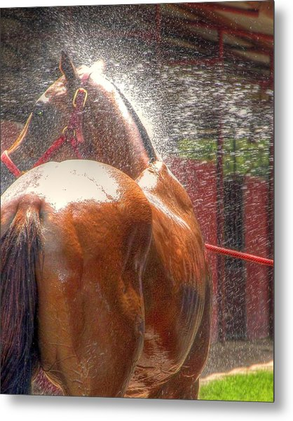 Polo Pony Shower Hdr 21061 Metal Print