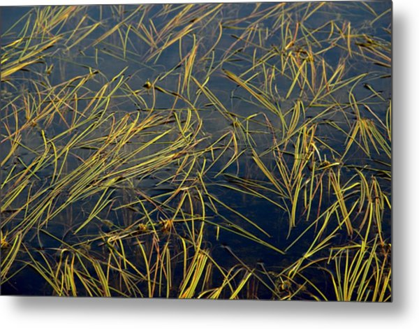 Pond Grass Metal Print by Marv Russell