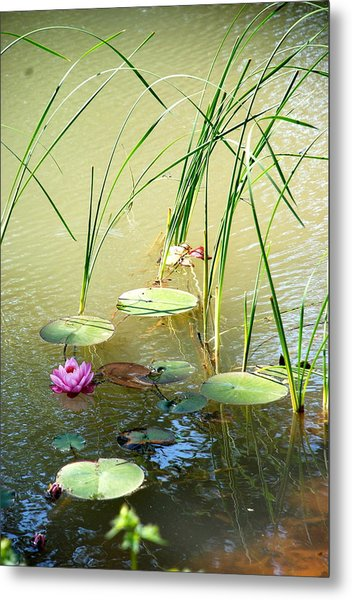 Pond  Reflections Metal Print by Elmer Baez