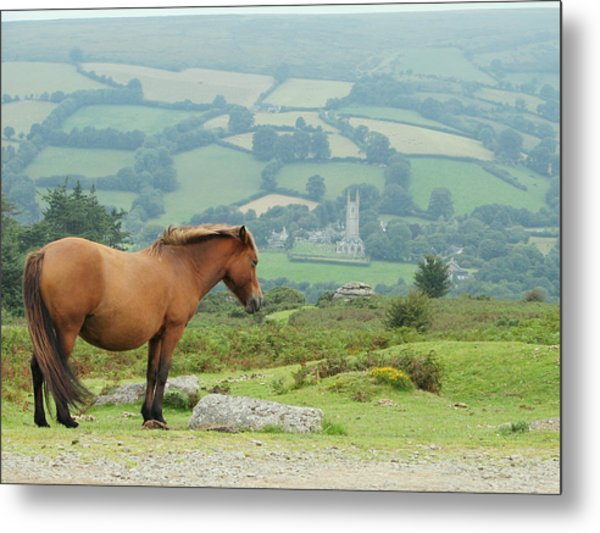 Pony Atop Hill Metal Print by Jf Halbrooks