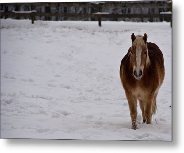 Pony In Snow Metal Print by Nickaleen Neff
