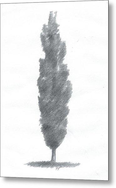 Poplar Drawing Number One Metal Print by Alan Daysh