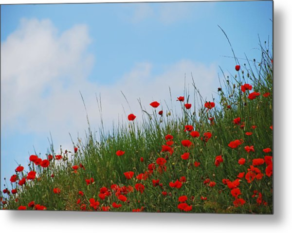 Poppies In A French Landscape Metal Print