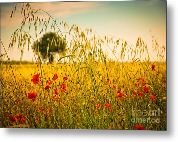 Poppies With Tree In The Distance Metal Print
