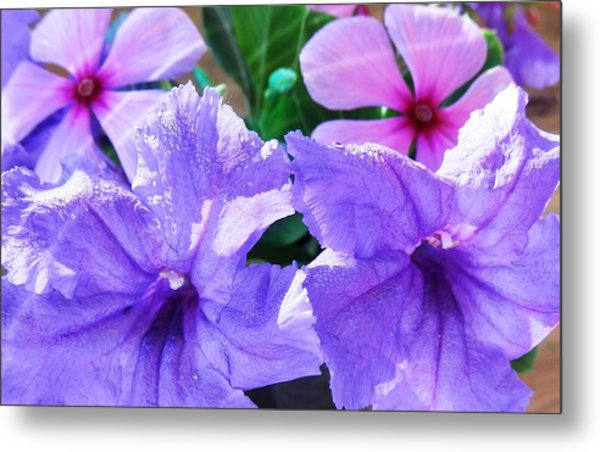 Popping Purple Petals Beauty Metal Print