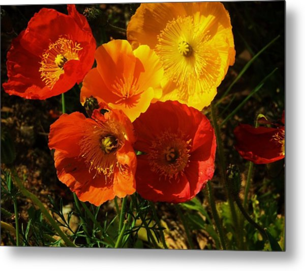 Poppy Bouquet Metal Print