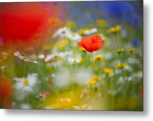 Poppy Field Fantasy Metal Print