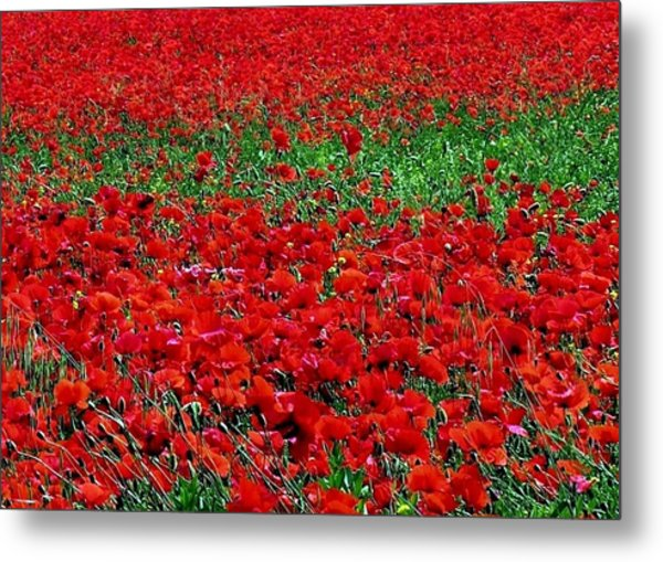 Poppy Field Metal Print by Jacqueline M Lewis