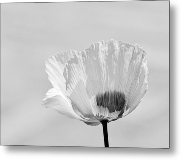 Poppy In White Metal Print