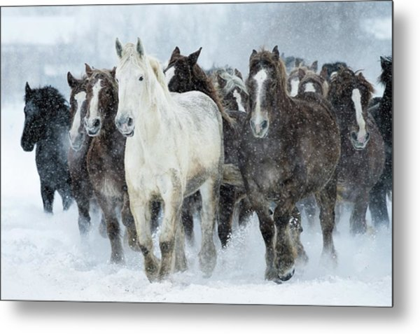 Populations Of Horses Metal Print by Makieni's Photo