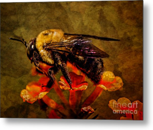 Portrait Of A Bee Metal Print