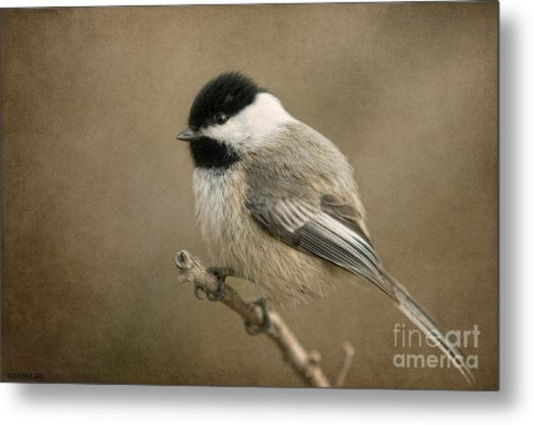 Portrait Of A Blackcapped Chickadee Metal Print