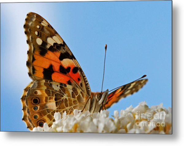 Portrait Of A Butterfly Metal Print