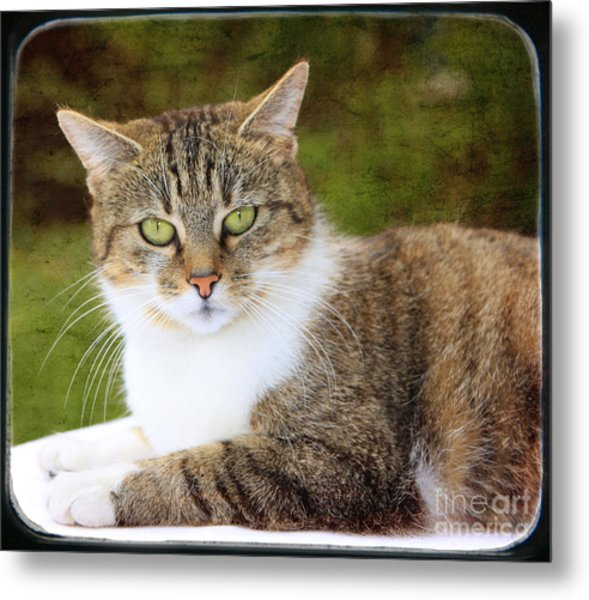 Portrait Of A Cat Metal Print by Angela Bruno