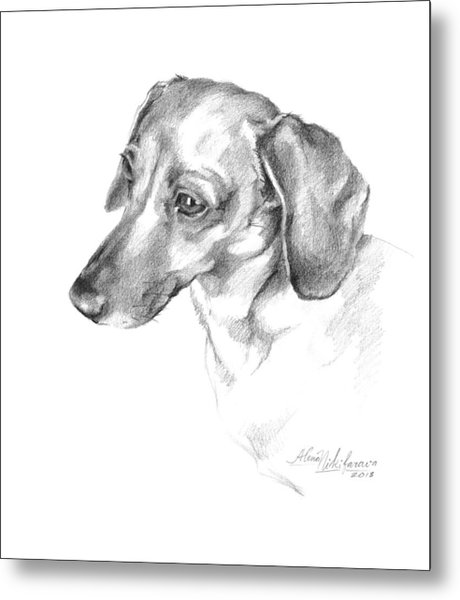 Portrait Of A Dachshund Paying Attention Metal Print