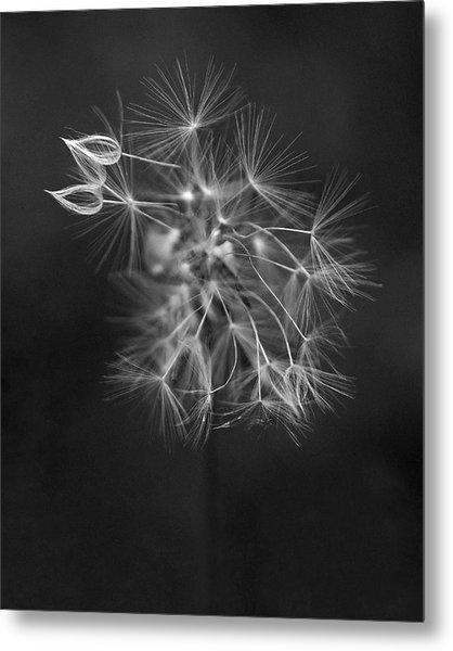 Portrait Of A Dandelion Metal Print