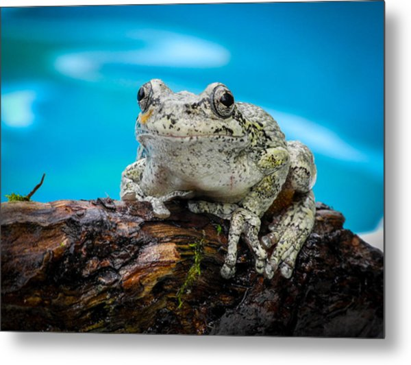 Portrait Of A Frog Metal Print