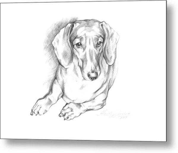 Portrait Of A Laying Dachshund Metal Print