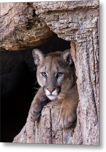 Portrait Of A Watcher Metal Print
