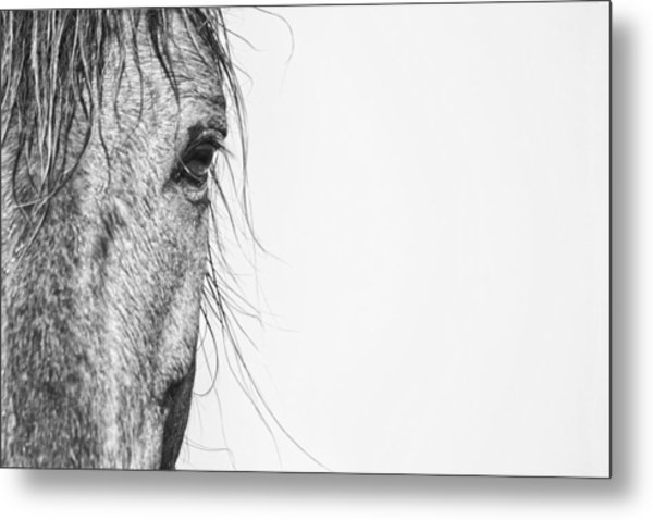 Portrait Of A Wild Mustang Metal Print