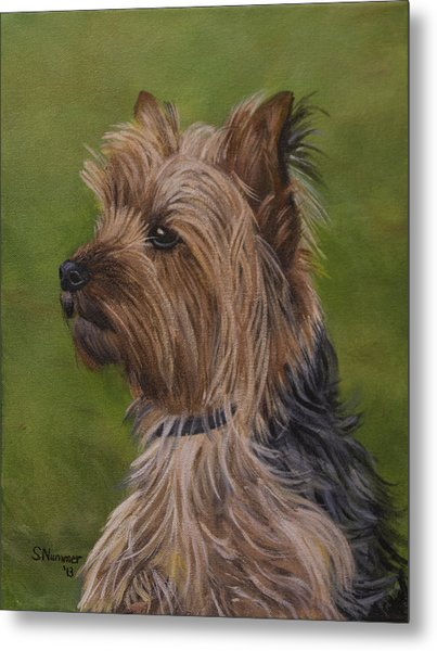 Portrait Of A Yorkie Metal Print