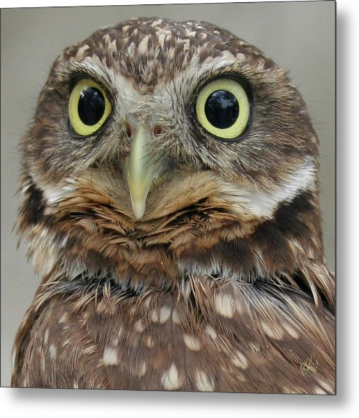 Portrait Of Burrowing Owl Metal Print