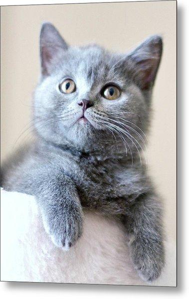 Portrait Of Cute Cat Metal Print by Ozcan Malkocer
