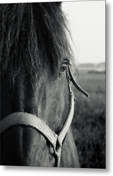 Portrait Of Horse In Black And White Metal Print
