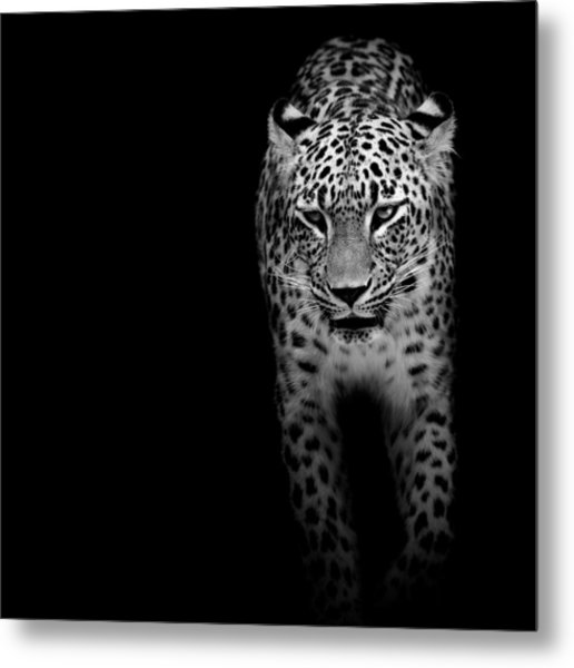 Portrait Of Leopard In Black And White II Metal Print