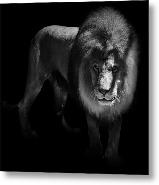 Portrait Of Lion In Black And White Metal Print