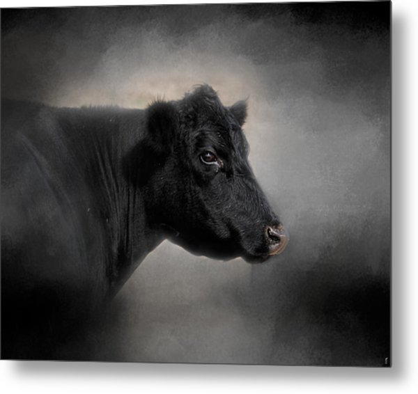 Portrait Of The Black Angus Metal Print