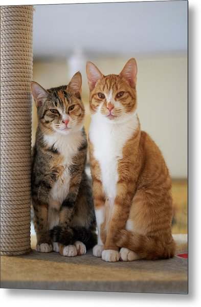 Portrait Of Two Young Cats Metal Print by Akimasa Harada