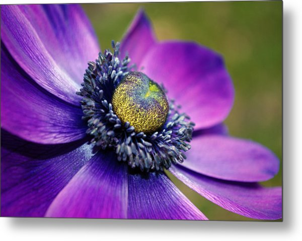 Positively Purple Metal Print