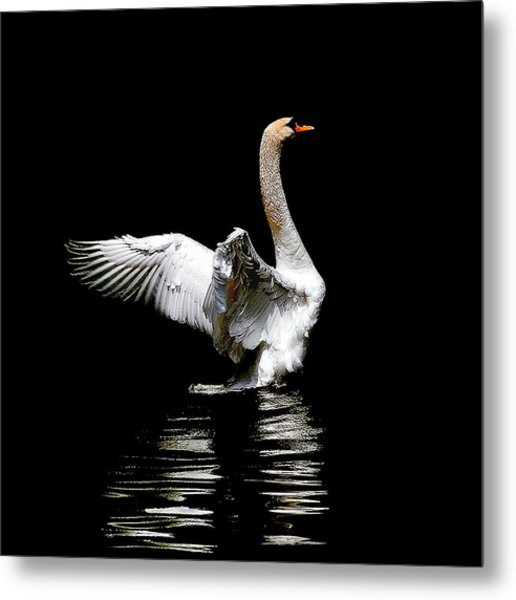 Power And Beauty Metal Print