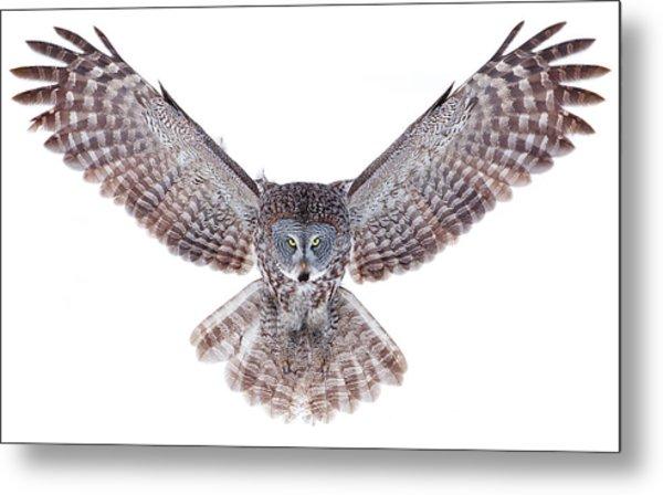 Power - Great Grey Owl Metal Print