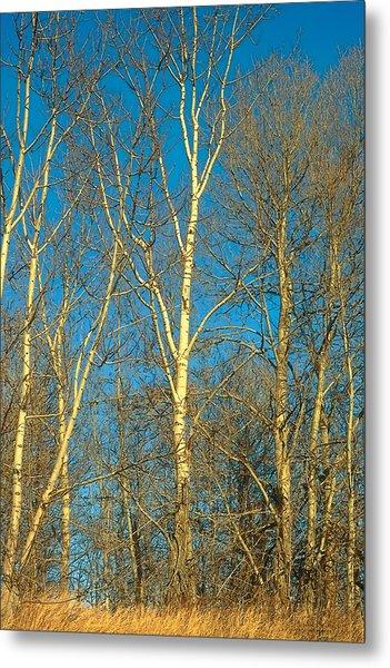 Prairie Autumn 9 Metal Print